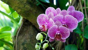 Декоративное растение орхидея