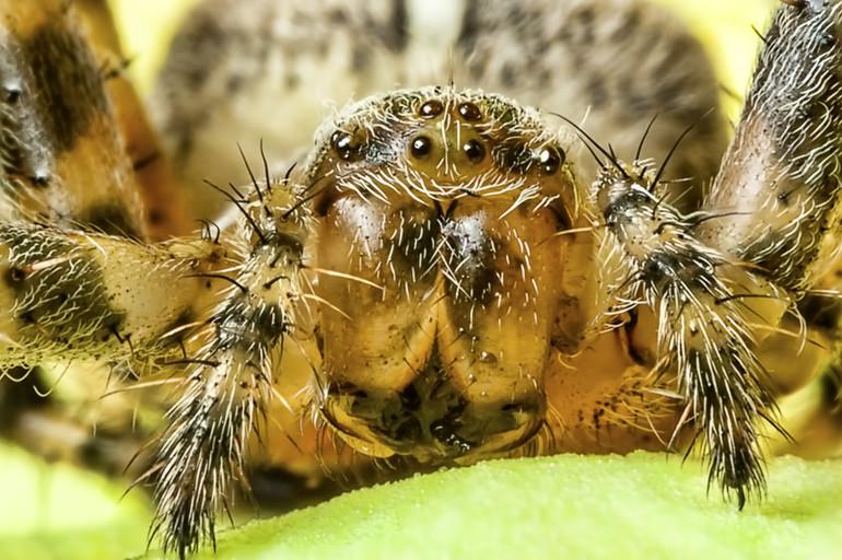 Факты о пауке крестовике