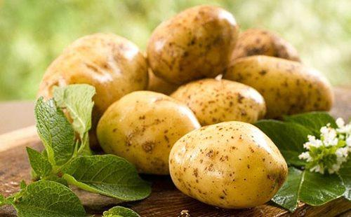 Клубни картофеля на столе