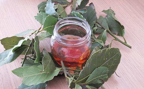 Настой из листьев лаврового листа