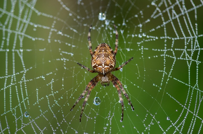 Окраска паука крестовика