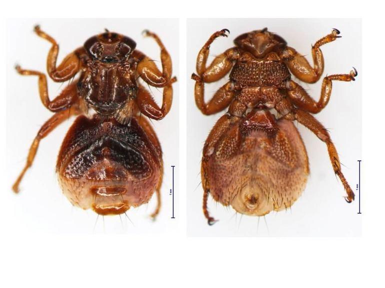 Описание насекомого