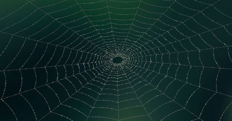 Паутина паука крестовика
