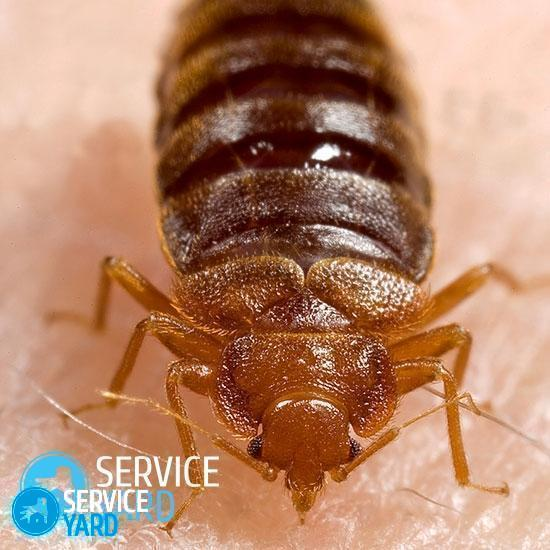 watermarked - How-to-get-rid-of-bed-bugs